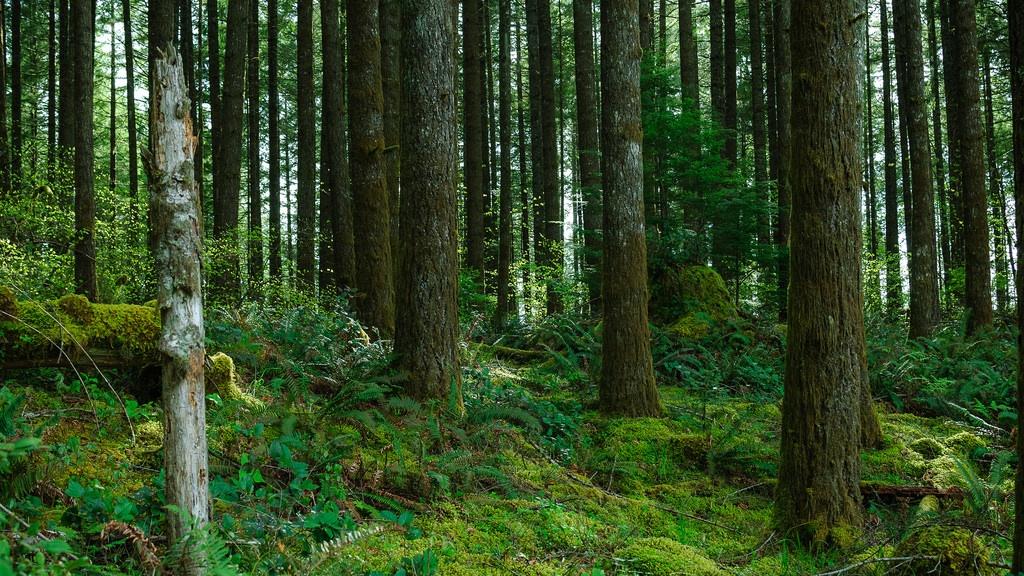 Loren Kerns Forest