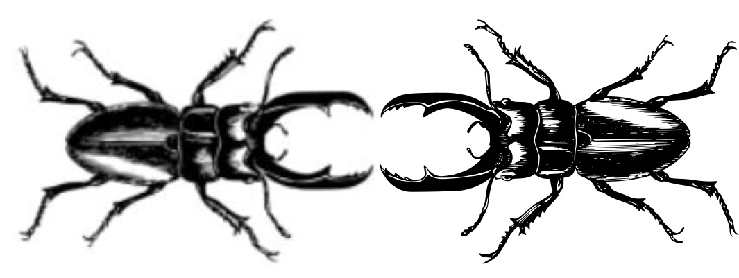 bug comparison.jpg